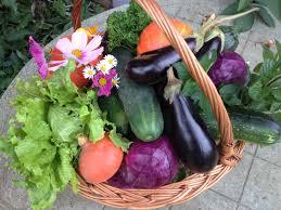 Seizoensgroenten oogst - Gezond aan tafel - blog
